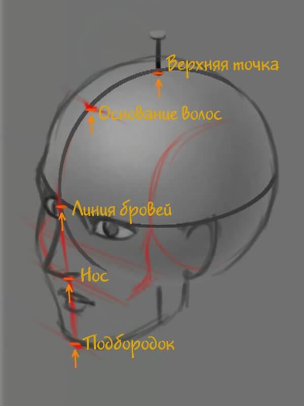 Ключевые точки в пропорциях головы