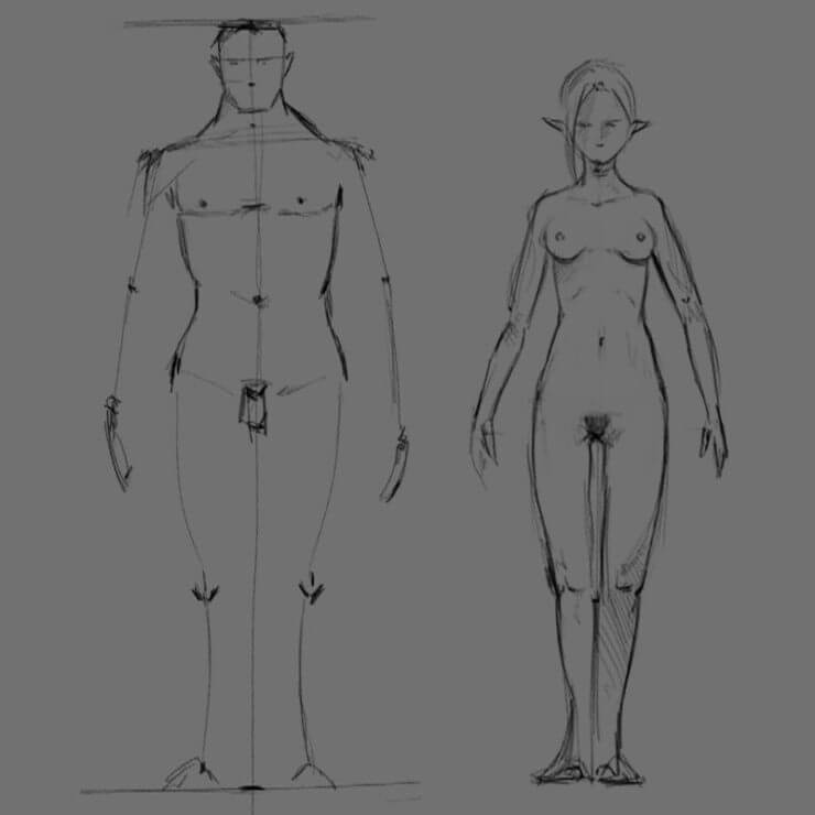 Различия в форме тела у мужчин и женщин