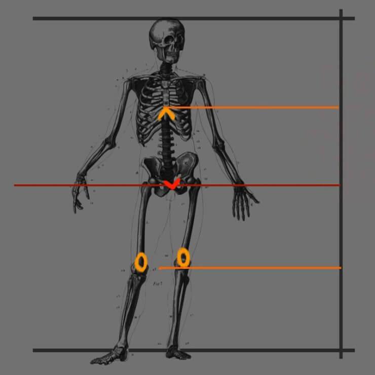 Определим расположение основания груди и коленей